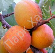 Хвойные,  лиственные,  плодовые деревья,  кустарники,  цветы,  рассада - foto 4