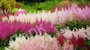 Газонные травы,  цветы,  деревья,  кустарники,  рассада - foto 0